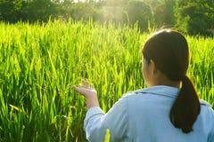 La muchacha llevó una camisa de la mezclilla que caminaba en un prado verde en la puesta del sol fotos de archivo libres de regalías