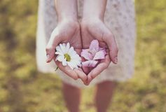 La muchacha muestra las floraciones en su mano Imagen de archivo libre de regalías