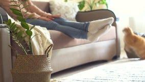 La muchacha pone la flor en la cesta y se sienta en el sofá con un gato rojo almacen de metraje de vídeo