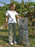 La muchacha pone las uvas escogidas en el bolso Fotos de archivo