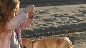 La muchacha preescolar de la muchacha en la playa alimenta el perro Primavera almacen de video