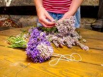 La muchacha prepara las hierbas medicinales aromáticas para los dormitorios Manojo agradable Imagen de archivo