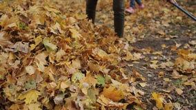 La muchacha prepara un rastrillo para el follaje de limpieza del otoño Una mujer está sosteniendo un rastrillo Primer metrajes