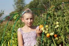 La muchacha presenta cerca de las plantas de tomate Imagenes de archivo