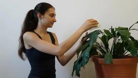 La muchacha que cuida para una flor en conserva Spathiphyllum Limpia las hojas grandes de una planta grande Una mujer sonríe y da almacen de video