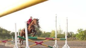 La muchacha que monta un caballo marrón salta sobre la barrera almacen de metraje de vídeo