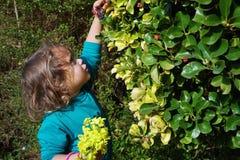 la muchacha rasga las flores de arbustos foto de archivo
