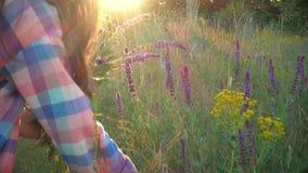 La muchacha recoge las flores del salvia en el tiempo de la puesta del sol almacen de metraje de vídeo