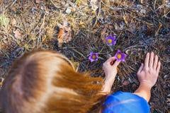La muchacha recoge la pasque-flor en el bosque de la primavera fotografía de archivo