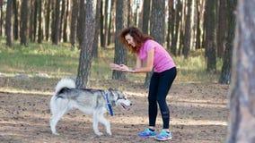 La muchacha rizada hermosa está entrenando al perro fornido metrajes