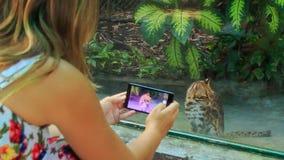 La muchacha rubia de la parte trasera toma la foto del gato salvaje en ventana del parque zoológico almacen de metraje de vídeo