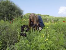 La muchacha rubia mira las flores irisa en el área natural protegida Foto de archivo libre de regalías
