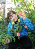 La muchacha sonriente escoge la manzana madura del árbol en jardín Fotografía de archivo