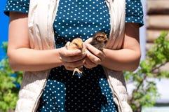 La muchacha sosteniendo pequeños pollos Fotos de archivo