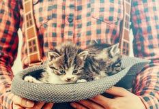 La muchacha sostiene el sombrero con los gatitos Imagen de archivo
