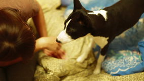 La muchacha sostiene una pata del perro almacen de video