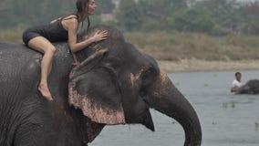 La muchacha tiene una ducha en el elefante almacen de video
