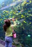 La muchacha toma el cuadro en el acuario Imagenes de archivo