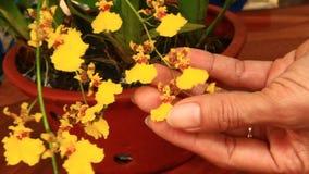 La muchacha toma el cuidado de orquídeas metrajes