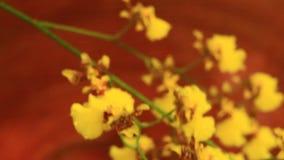 La muchacha toma el cuidado de orquídeas almacen de video