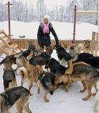 La muchacha y los perros Foto de archivo libre de regalías