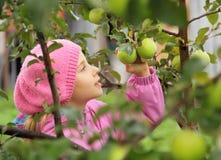 La muchacha y un manzana-árbol Imagen de archivo libre de regalías