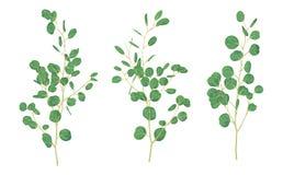 La muestra de ramas con las hojas del eucalipto es un dólar de plata VE ilustración del vector
