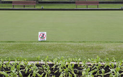 La muestra evita la hierba sobre hierba verde Imagen de archivo libre de regalías