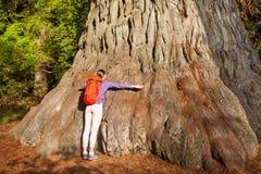 La mujer abraza el árbol grande en la secoya California Fotografía de archivo