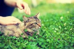 La mujer acaricia el gato Foto de archivo