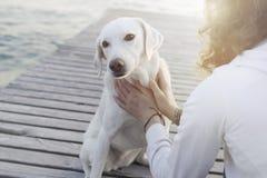 La mujer acaricia suavemente su perro imágenes de archivo libres de regalías