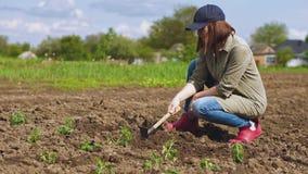 La mujer afloja el suelo antes de plantar alm?cigos imagenes de archivo