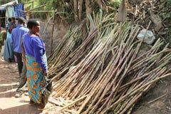 La mujer africana elige la caña de azúcar en el mercado. Fotografía de archivo