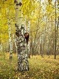 La mujer alegre mira hacia fuera de detrás un árbol Fotografía de archivo