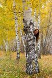 La mujer alegre mira hacia fuera de detrás un árbol Foto de archivo