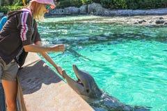 La mujer alimenta el delfín fotos de archivo