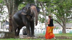 La mujer alimenta el elefante almacen de metraje de vídeo