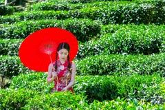 La mujer asiática que lleva chino tradicional se viste y paraguas rojo en campo del té verde imagen de archivo