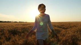 La mujer atractiva joven está caminando a lo largo de un campo de trigo en un vestido blanco en un fondo de la puesta del sol metrajes