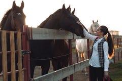 La mujer bastante joven toma cuidado de su caballo Imagen de archivo