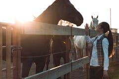 La mujer bastante joven toma cuidado de su caballo Fotos de archivo libres de regalías