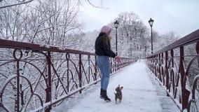 La mujer camina en el puente con poco perro Pequeño terrier de Yorkshire en funcionamientos del correo cerca del dueño en un parq metrajes