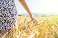 La mujer camina en un campo de maíz Imagen de archivo