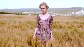 La mujer camina a través del campo de trigo, el venir del tiempo de cosecha almacen de video