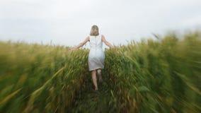 La mujer con el pelo rubio en un vestido azul corre en el campo con trigo almacen de video