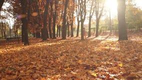 La mujer corre en un parque soleado hoja-cubierto otoñal metrajes