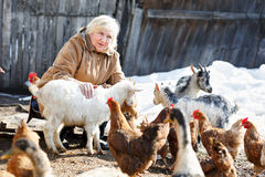 La mujer cuida pequeños cabras y pollos en hogar Fotografía de archivo