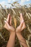La mujer da granos de la explotación agrícola Imagen de archivo libre de regalías