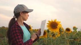 La mujer de negocios analiza beneficios en campo mujer del granjero que trabaja con una tableta en un campo del girasol en la luz almacen de video