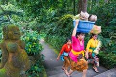 La mujer del Balinese que lleva las ofrendas para el ritual hindú diario es una tradición, bosque del mono, Bali, Indonesia, 10 0 fotos de archivo
